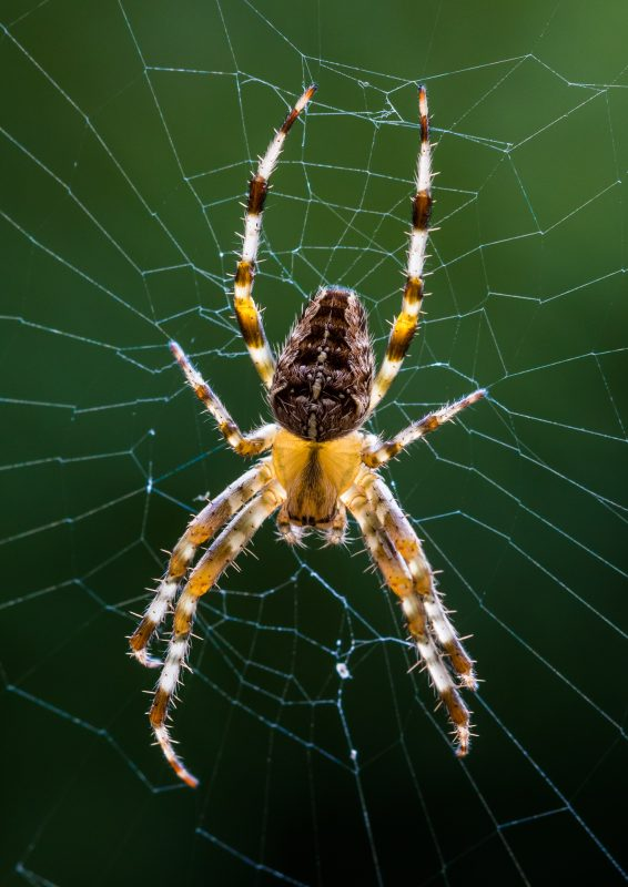 Permalink to:Spider – Macro