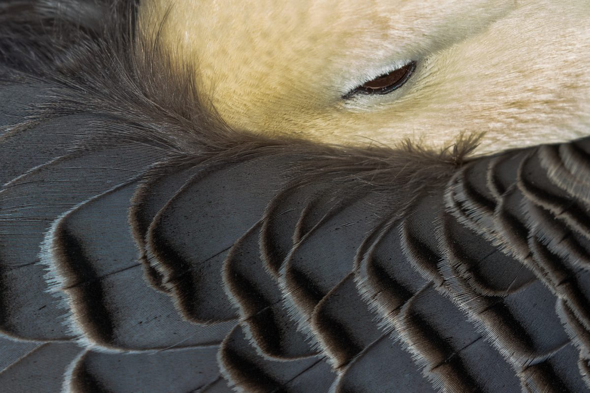 Permalink to:Bird Feathers – Close-up
