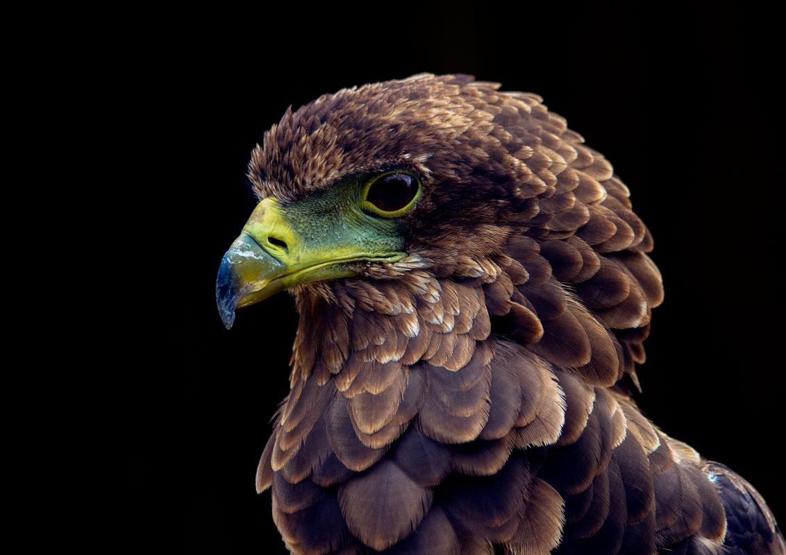Permalink to:Hawk