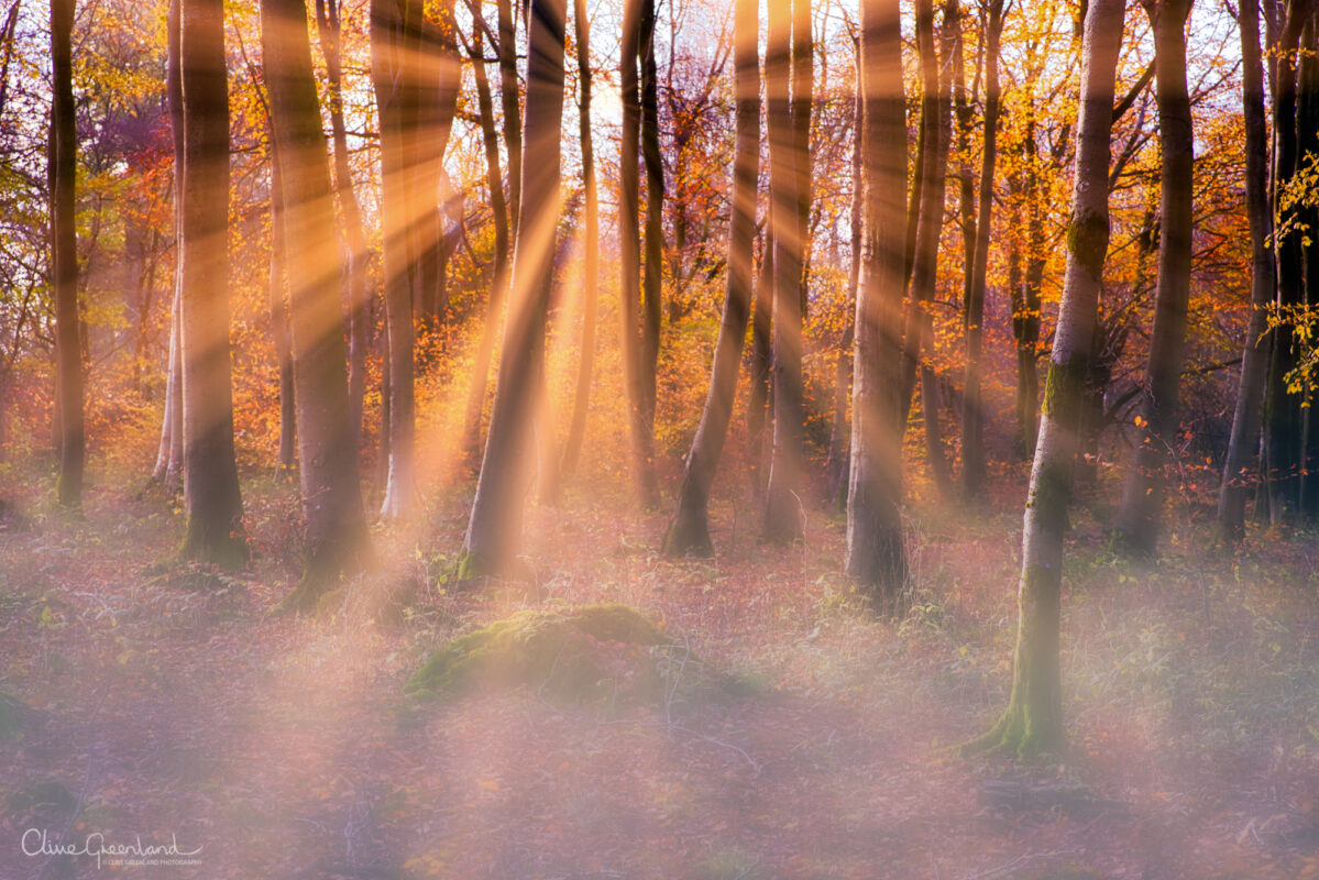Permalink to:Savernake Forest – Autumn sunrise with mist.